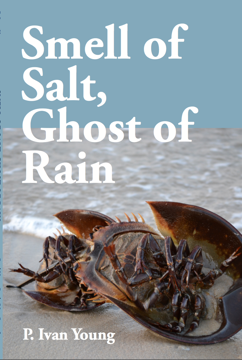 Cover for SMELL OF SALT, GHOST OF RAIN by P. Ivan Young. A photo: a crustacean sits on a beach, with calm waters and a blue sky behind them.